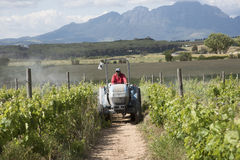 Tractor and sprayer spraying vines Royalty Free Stock Photography