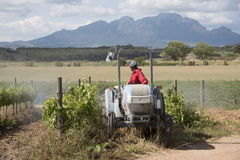 Tractor and sprayer spraying vines Stock Photos