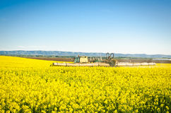 Tractor spraying canola field Stock Image