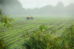 Tractor Spraying Crop. A farmer sprays his crop on a misty morning Stock Photo