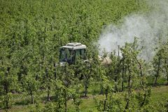 Tractor spraying insecticide or fungicide in apple orchard. Tractor using a air dust machine sprayer with a chemical insecticide or fungicide in apple orchard royalty free stock photography