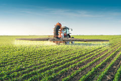 Tractor spraying pesticides. On soy bean Stock Photos