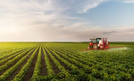 Tractor spraying pesticides at soy bean field. S stock images