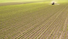 Tractor spraying pesticides at soy bean field royalty free stock photos