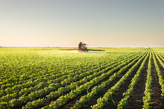 Tractor spraying pesticides Stock Photography