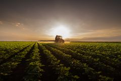 Tractor spraying pesticides on soybean field with sprayer at spr stock photo
