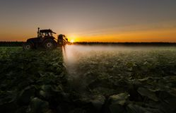 Tractor spraying pesticides on vegetable field with sprayer at s Royalty Free Stock Photo