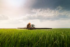 Tractor spraying pesticides on wheat field with sprayer at sprin Stock Photo