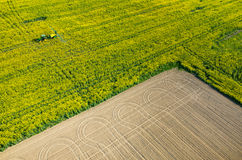Tractor spraying on the rape field Royalty Free Stock Photos