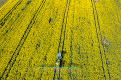 Tractor spraying on the rape field Stock Image
