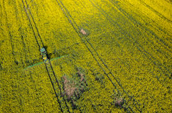 Tractor spraying on the rape field Royalty Free Stock Photography