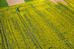 Tractor spraying on the rape field Stock Photos