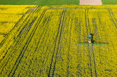 Tractor spraying on the rape field Royalty Free Stock Image
