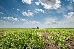 Tractor spraying soy. In the spring Royalty Free Stock Photography