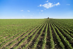 Tractor spraying soybean crop field. Stock Images