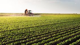 Tractor spraying soybean field stock image