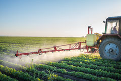 Tractor spraying. Soybean field at spring Stock Photography