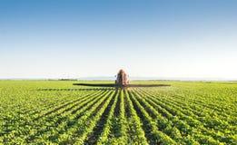 Tractor spraying Stock Image