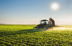 Tractor spraying Stock Image