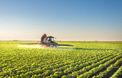 Tractor spraying. Soybean field in spring Stock Photo