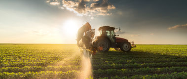 Tractor spraying soybean field at spring Royalty Free Stock Photos