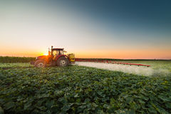 Tractor spraying vegetable field at spring Royalty Free Stock Image