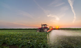 Tractor spraying vegetable field at spring Stock Images