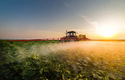 Tractor spraying vegetable field at spring Stock Photo