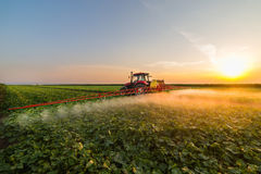 Tractor spraying vegetable field at spring. Tractor spraying pesticides on vegetable field  with sprayer at spring Royalty Free Stock Image