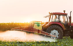 Tractor spraying vegetable field at spring Royalty Free Stock Photo