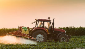 Tractor spraying vegetable field at spring Stock Photography