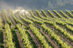 Tractor Spraying in Vineyard Royalty Free Stock Photography