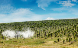 Tractor spraying vineyard Stock Images
