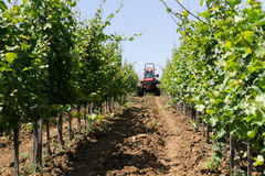 Tractor spraying vineyard royalty free stock image