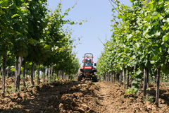 Tractor spraying vineyard royalty free stock images