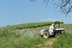 Tractor spraying vineyard. In a sunny day Royalty Free Stock Image