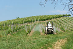 Tractor spraying vineyard. In sunny day Stock Photography