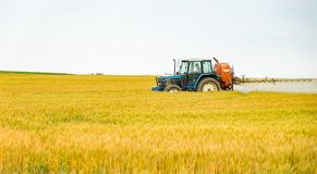 A tractor spraying water or fertilizer or chemical to golden barley field. royalty free stock image