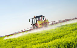 Tractor spraying wheat field Royalty Free Stock Photo