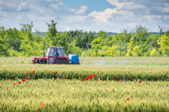 Tractor spraying wheat. In the spring Stock Photo