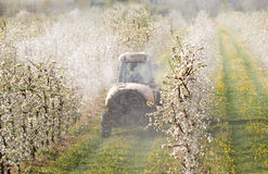 Tractor sprays insecticide Stock Images
