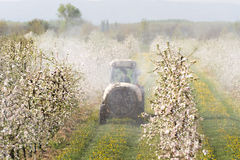 Tractor sprays insecticide Royalty Free Stock Image