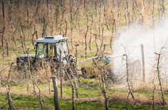 Tractor sprays insecticide in apple orchard Royalty Free Stock Photo
