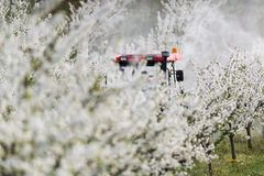 Tractor sprays insecticide in apple orchard field Stock Images