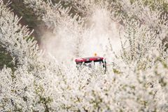 Tractor sprays insecticide in apple orchard field Stock Photos