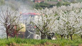 Tractor sprays insecticide in apple orchard field Royalty Free Stock Photo