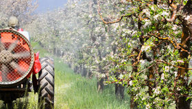Tractor sprays insecticide in an apple orchard Stock Photo