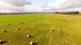 The autumn harvest stock footage