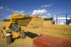 Tractor stacking straw bales on trailer in sunny, rural field Stock Photo