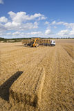 Tractor stacking straw bales on trailer in sunny, rural field Royalty Free Stock Images